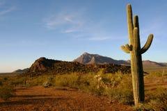Cactus de Saguaro, désert de sonoran au lever de soleil Images stock