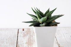 Cactus de Succulents dans des pots concrets au-dessus du fond blanc sur les shelfsucculents ou cactus dans des pots concrets au-d Photographie stock libre de droits