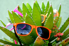 Cactus de Sunglass photo stock