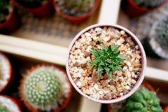 Cactus in de tuin Stock Foto