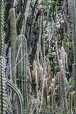 Cactus in de tuin Stock Fotografie