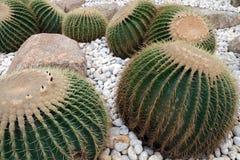 Cactus in de tuin wordt geplant die royalty-vrije stock foto
