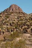 Cactus in de woestijn royalty-vrije stock foto