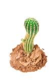 Cactus in de zandmening van hierboven Royalty-vrije Stock Afbeelding