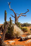Cactus and dead tree Royalty Free Stock Images