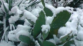 Cactus debajo de la nieve metrajes