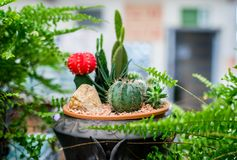 Cactus decorate in the garden. Cactus, sugar palm leaf, decoration in the garden Royalty Free Stock Photos