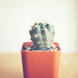 Cactus for decorated with retro filter Royalty Free Stock Photos