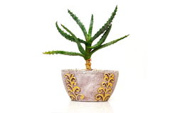 cactus decorativo Foto de archivo