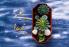 Cactus decorativo en un fondo azul con los pequeños corazones de madera, visión superior, espacio en blanco para el texto Fotografía de archivo libre de regalías