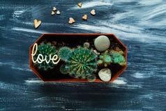 Cactus decorativos en un fondo azul con los pequeños corazones de madera, visión superior, espacio en blanco para el texto Imágenes de archivo libres de regalías