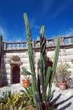 Cactus dei giardini di Vizcaya della villa Immagine Stock Libera da Diritti