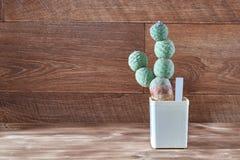 Cactus dei segmenti rotondi senza aghi, spine su fondo di legno d'annata Succulente verde folto in vaso Copi lo spazio Fotografie Stock