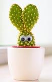 Cactus del coniglietto Fotografia Stock Libera da Diritti