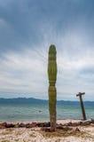 Cactus del deserto vicino al mare Immagini Stock Libere da Diritti