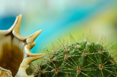 Cactus del fnd della conchiglia nella rugiada su un colore Fotografia Stock Libera da Diritti