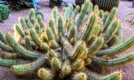 Cactus del giardino botanico a Marrakesh, Marocco Fotografia Stock Libera da Diritti