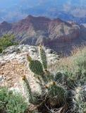 Cactus del grande canyon Fotografia Stock Libera da Diritti