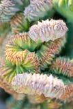 Cactus del jardín del desierto Fotos de archivo libres de regalías