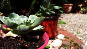 Cactus del jard?n imagenes de archivo