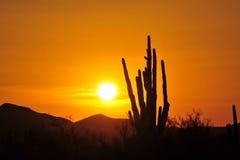 Cactus del Saguaro Fotos de archivo libres de regalías