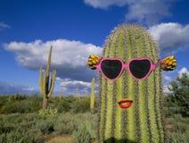 Cactus del Saguaro con gli occhiali da sole Fotografia Stock