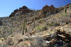 Cactus del Saguaro de Tucson Arizona del paso de las puertas fotografía de archivo