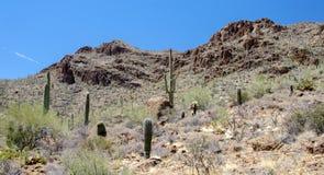 Cactus del Saguaro de Tucson Arizona del paso de las puertas imagen de archivo