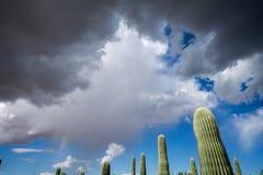 Cactus del saguaro e cielo di monsone Fotografia Stock Libera da Diritti