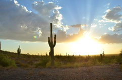 Cactus del Saguaro en cielo del paisaje del desierto Imagen de archivo libre de regalías