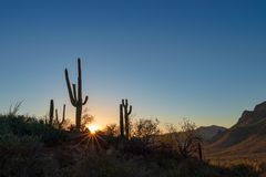 Cactus del Saguaro en el desierto seco de Arizona del verano en la puesta del sol fotos de archivo libres de regalías