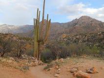 Cactus del Saguaro en la oscuridad fotografía de archivo