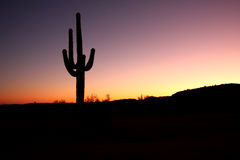 Cactus del Saguaro isolato al tramonto Fotografie Stock