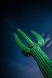 Cactus del saguaro nel deserto dell'Arizona Fotografia Stock