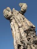 Cactus del Saguaro que crece en el desierto en Arizona, una a caliente de Sonoran Fotos de archivo libres de regalías