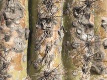 Cactus del Saguaro que crece en el desierto en Arizona, una a caliente de Sonoran Imágenes de archivo libres de regalías