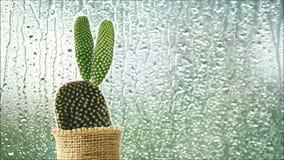 Cactus delante de las gotas de lluvia que bajan en una ventana metrajes