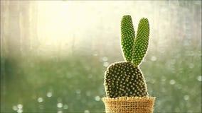 Cactus delante de las gotas de lluvia que bajan en una ventana con la luz de la mañana metrajes