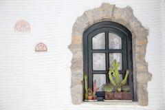 Cactus delante de una ventana Foto de archivo libre de regalías