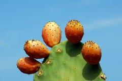 Cactus della pala nell'isola di Corfù Fotografia Stock