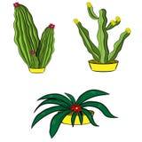 Cactus della raccolta con il fiore Immagine Stock Libera da Diritti