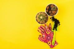 Cactus delle piante verdi dei vasi degli strumenti di giardino su un fondo giallo luminoso Il concetto della molla Copi lo spazio immagine stock