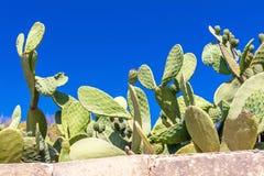 Cactus derrière la barrière Photographie stock