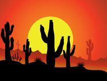 Cactus in desert Royalty Free Stock Photography
