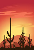 Cactus and Desert Stock Photo