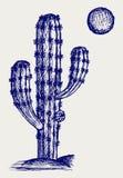 Cactus in desert Stock Images