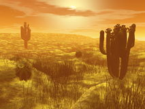 Cactus in the desert - 3D render. Cactus in the desert by orange sunset - 3D render Stock Images