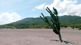 Cactus , desert, mountain, blue sky stock image