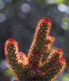Cactus. In the desert nature stock photos