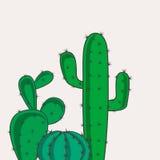 Cactus desert plants Royalty Free Stock Images